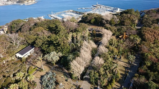 Article 41-photo 12-15 03 2019_Enoshima_S Cook garden from lighthouse