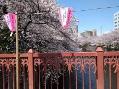 Article 44-photo 12-05 04 2019_Sakura_Meguro river