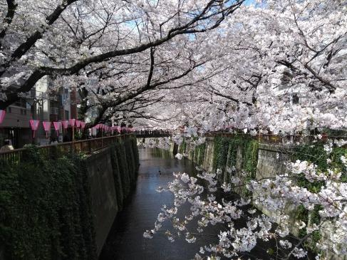 Article 44-photo 17-05 04 2019_Sakura_Meguro river