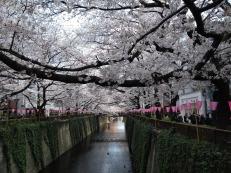 Article 44-photo 19-05 04 2019_Sakura_Meguro river