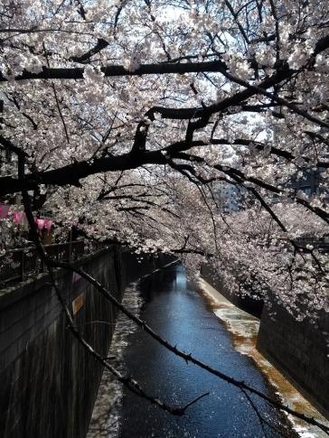 Article 44-photo 2-05 04 2019_Sakura_Meguro river
