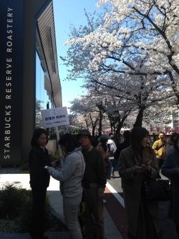 Article 44-photo 26-05 04 2019_Sakura_Meguro river_Starbucks