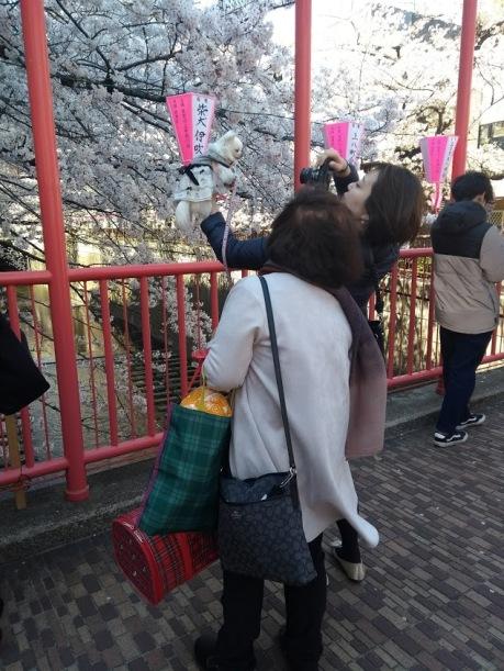 Article 44-photo 27-05 04 2019_Sakura_Meguro river