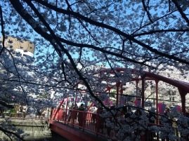 Article 44-photo 29-05 04 2019_Sakura_Meguro river