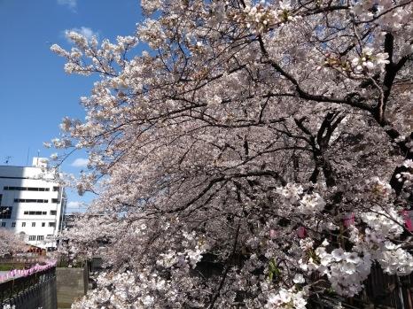 Article 44-photo 3-05 04 2019_Sakura_Meguro river