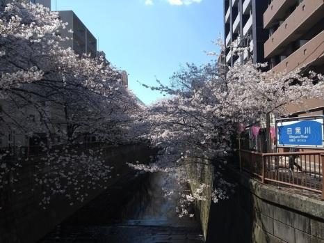 Article 44-photo 31-05 04 2019_Sakura_Meguro river