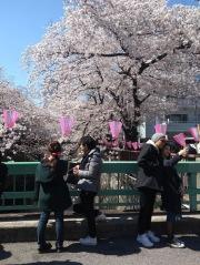Article 44-photo 33-05 04 2019_Sakura_Meguro river