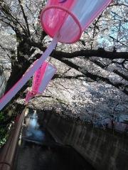 Article 44-photo 35-05 04 2019_Sakura_Meguro river