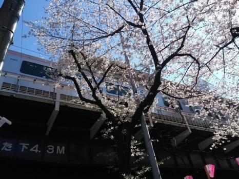 Article 44-photo 37-05 04 2019_Sakura_Meguro river