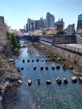 Article 44-photo 4-05 04 2019_Sakura_Meguro river