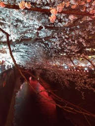 Article 44-photo 45-05 04 2019_Sakura_Meguro river