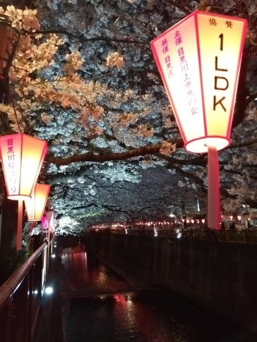 Article 44-photo 48-05 04 2019_Sakura_Meguro river