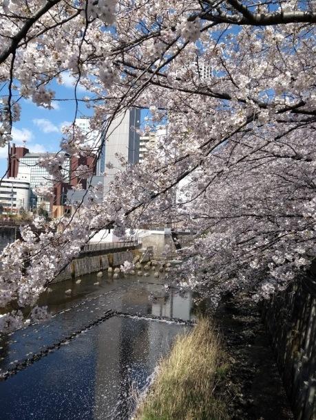 Article 44-photo 5-05 04 2019_Sakura_Meguro river