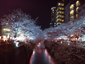 Article 44-photo 50-05 04 2019_Sakura_Meguro river