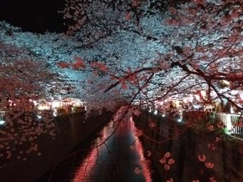Article 44-photo 51-05 04 2019_Sakura_Meguro river