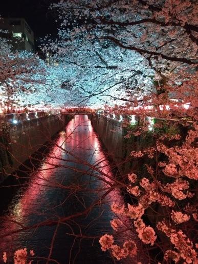 Article 44-photo 53-05 04 2019_Sakura_Meguro river