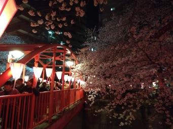 Article 44-photo 54-05 04 2019_Sakura_Meguro river