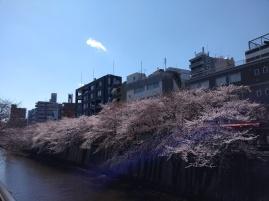 Article 44-photo 6-05 04 2019_Sakura_Meguro river