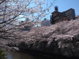 Article 44-photo 7-05 04 2019_Sakura_Meguro river