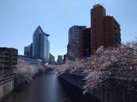 Article 44-photo 8-05 04 2019_Sakura_Meguro river