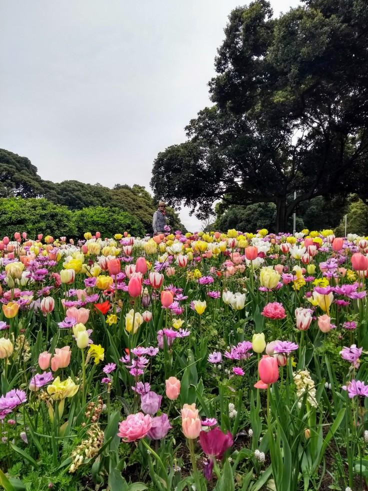Article 49-photo 1-29 04 2019_Yamashita park_Yokohama