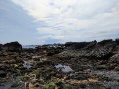 Article 50-photo 11-08 05 2019_Jogashima isle