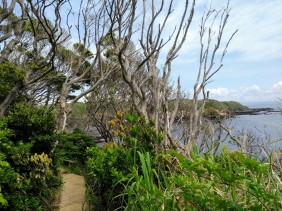 Article 50-photo 14-08 05 2019_Jogashima isle