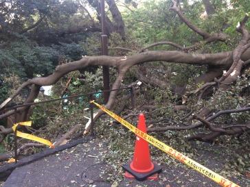 Article 69-photo 13_Motomachi park_13 10 2019