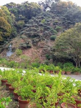 Article 72-photo 57_29 10 2019_Ryosenji temple_Perry road_Shimoda