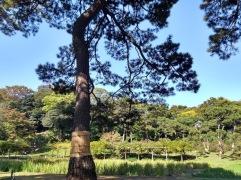 Article 75-photo 15-13 11 2019_Koishikawa Kōraku-en_Tokyo