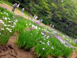 Article 75-photo 43-19 06 2019_Yoyogi park_Tokyo