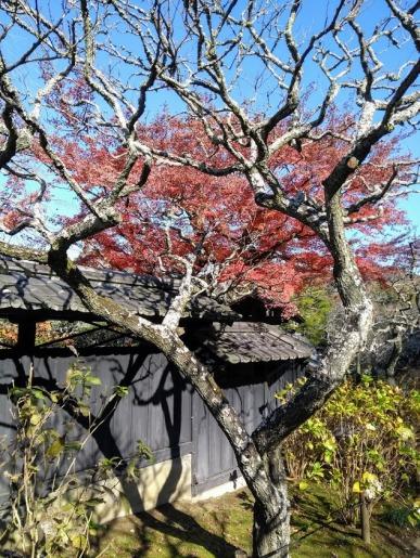 Article 79-photo 7-18 12 2019_Tokeiji temple_Kamakura