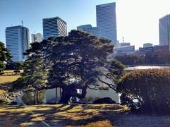Article 82-photo 43-23 01 2019_Hama Rikyu garden