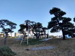 Article 82-photo 45-23 01 2019_Hama Rikyu garden