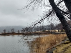 Article 89-photo 7-10 03 2020_Kawaguchiko lake