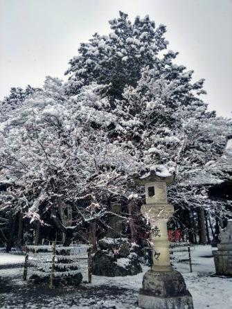 Article 93-photo 13-14 02 2020_Kawaguchiko_Fuji Ômuro Sengen