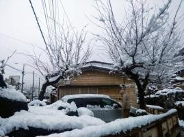 Article 93-photo 26-14 02 2020_Kawaguchiko