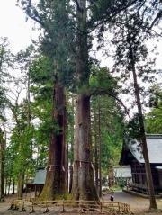 Article 100-photo 9-07 04 2020_Kawaguchi Asama shrine