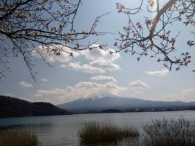 Article 99-photo 3-03 04 2020_Kawaguchiko