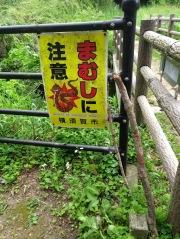 Article 110-photo 14-19 05 2020_Maedagawa