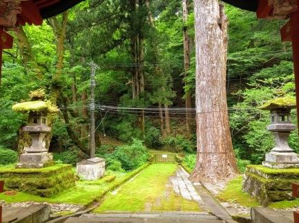 Article 114-photo 1-09 06 2020_Around Futarasan shrine_Nikko