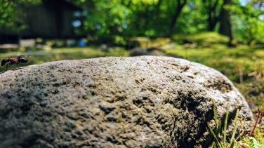 Article 114-photo 7-09 06 2020_Rinnoji garden_Nikko