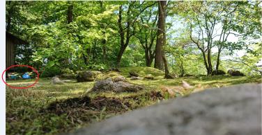 Article 114-photo 8-09 06 2020_Rinnoji garden_Nikko