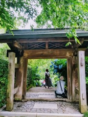 Article 117-photo 15-22 06 2020_Temple Meigetsu-in_Kamakura