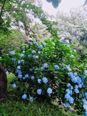 Article 117-photo 46-22 06 2020_Parc Motomachi_Yokohama