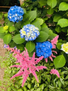 Article 117-photo 6-22 06 2020_Temple Meigetsu-in_Kamakura