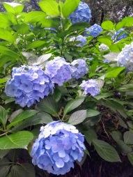 Article 118-photo 22-26 06 2020_Parc mémoriel Arisugawa-nomiya_Hiroo_Tokyo