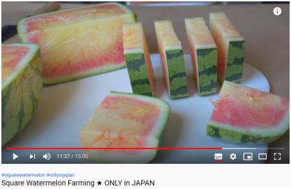 Article 118-photo 7-26 06 2020_Square watermelon