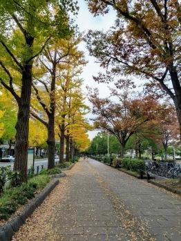 Article 121-photo 10-08 07 2020_Yamashita park_Yokohama