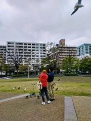 Article 121-photo 4-08 07 2020_Seagull_Yamashita park_Yokohama